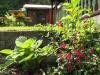 18-flora-fauna-4